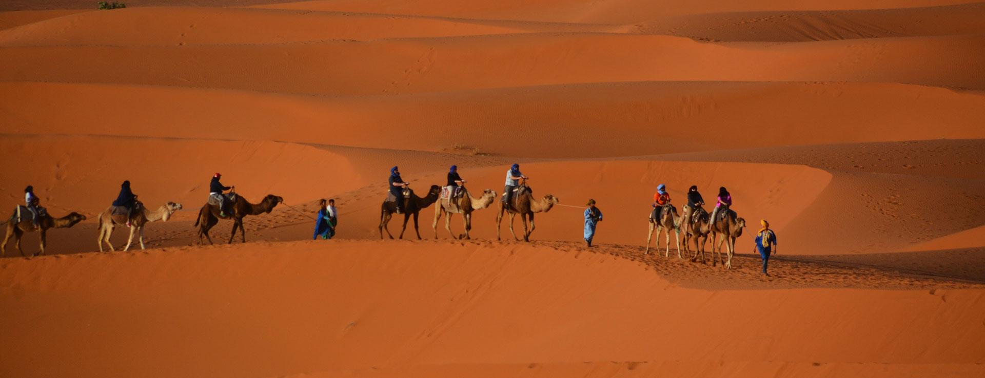 Sahara Desert Camel Trekking